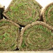 Rolled sod - Stock Photo