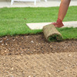 Laying sod for new lawn — ストック写真