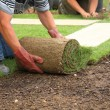 Laying sod for new lawn - Stock Photo
