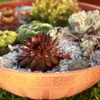 Stock Photo: Small rock garden