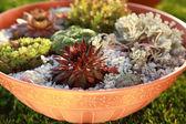 Small rock garden — Stock Photo