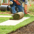 Laying sod for new lawn — Stockfoto