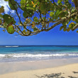 CaribbeBeach Scene — Stock Photo #2700849
