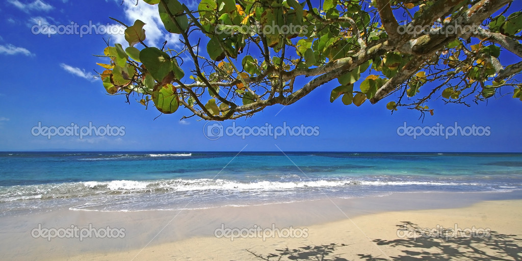 Caribbean Beach Scenes: Stock Photo © Monner #2700849