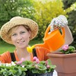 Young woman watering flowers — Stock Photo