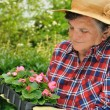 Senior woman - gardening — Stock Photo #2756598