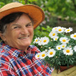 Senior woman gardening — Stock Photo #2756731