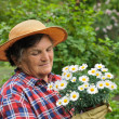 Senior woman gardening — Stock Photo #2756748