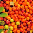 Stock Photo: Surinam Cherry , Pitangas, Eugeniuniflora, fruit of Madeira