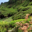 Stock Photo: Plateau of Parque natural de Madeira, Madeirisland, Portugal