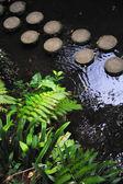 Jardín tropical de monte palace — Foto de Stock
