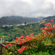 Village on the north coast of Madeira island — Stock Photo #3477500