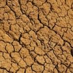 Cracked dry ground texture — Stock Photo