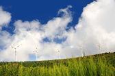 Eolic turbines — Stock Photo