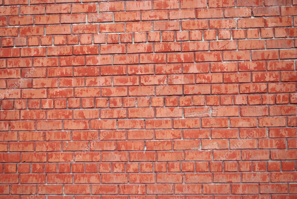 Background is the brick wall — Stock Photo #3391983