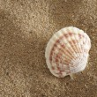 Shell at sunny ocean beach — Stock Photo
