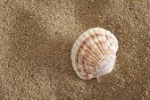 Powłoki na plaży oceanu słoneczny — Zdjęcie stockowe