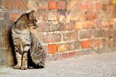 Stray cat - Felis catus — Stock Photo