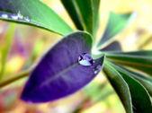 Drop of dew — Stock Photo