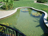 Pond in a summer park — Stock Photo