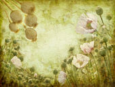 Grunge image of poppies — Stock Photo