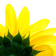 Detail of sunflower — Stock Photo #2770336