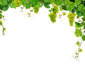 Fresh grapevine frame — Stock Photo