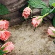 Pink roses on stone - Stock Photo