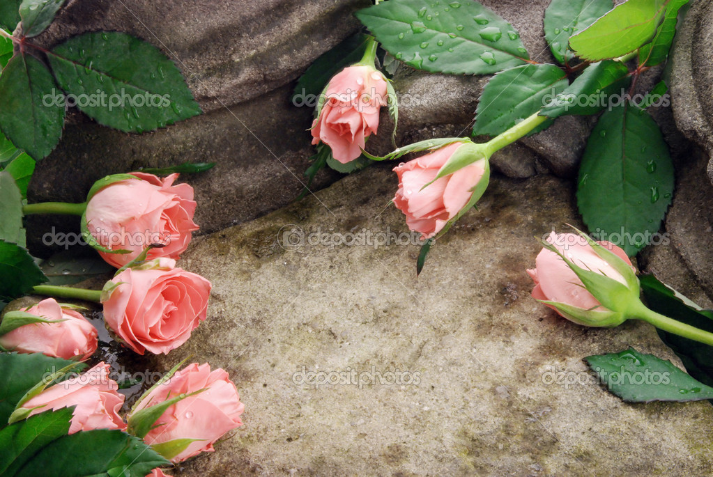 Composition of pink roses on sandstone, with waterdrops — Stock Photo #2822236