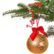 Branch with christmas bal — Stock Photo