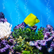 The Yellow Longnose Butterflyfish - Stock Photo