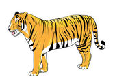 Tiger — Stock Vector