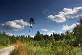 Tall pine — Stock Photo