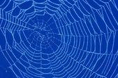 Cobweb with glistening dewdrops — Stock Photo
