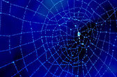 Dewy cobweb in blue — Stock Photo