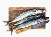 Fresh mackerels — Stock Photo