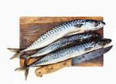 Fresh mackerels — Stockfoto
