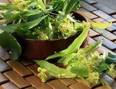 Flower of linden — Stock Photo