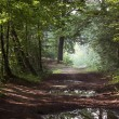 Stock Photo: Forest road