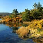 ������, ������: Yellow irish scenery