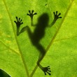 Frog shadow - Stock Photo