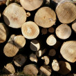 Stock Photo: Wood