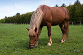 Horse in the meadow in the paddock — Stock Photo