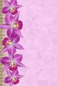 Orchids Border — Stock Photo