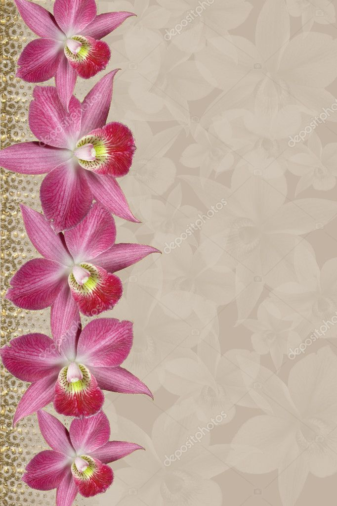 Lavender Orchids Border, golden   srtipes, for background, floral border, wedding invitation or template with copy space  — Stock Photo #2839809