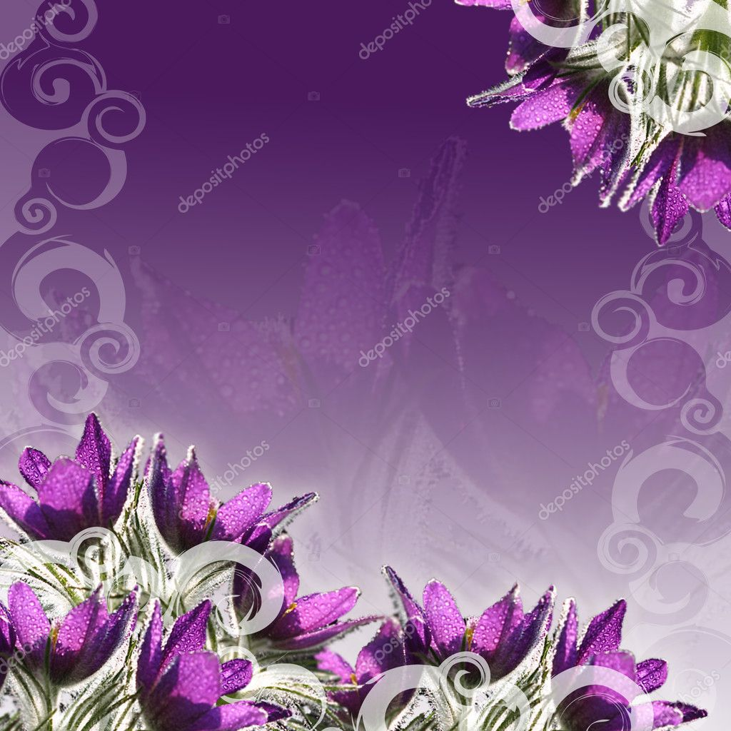 Pasque-flowers frame, for background, floral border, wedding invitation or template with copy space  — Stock Photo #2874458