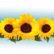 Sunflower — Stock Photo #2887465