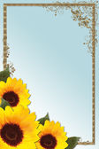 Sunflower border — Stock Photo