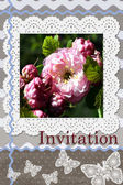 Invitation card with lace and rose — Stock Photo