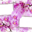 Two bamboo frames with orchids — Stock Photo